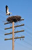 白いコウノトリが巣に戻る — ストック写真