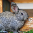 Little rabbit are in a rabbit-hutch — Stock Photo