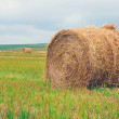 Bales of straw on the field — Stock Photo #32556265