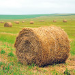 Bales of straw on the field — Stockfoto