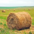 Bales of straw on the field — Stock Photo #32556275