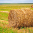 Bales of straw on the field — Stock Photo #32556287