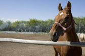 Horse — Stock Photo