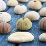 Seashells — Stock Photo #12425634