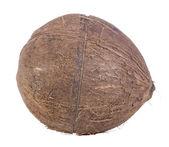 Kokosnoot close-up — Stockfoto