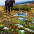 Stock Photo: Horse tundra