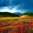 Stock Photo: Tundra mountain wood