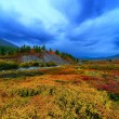 Taiga meadow — Stock Photo