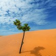 Tree desert sand — Stock Photo