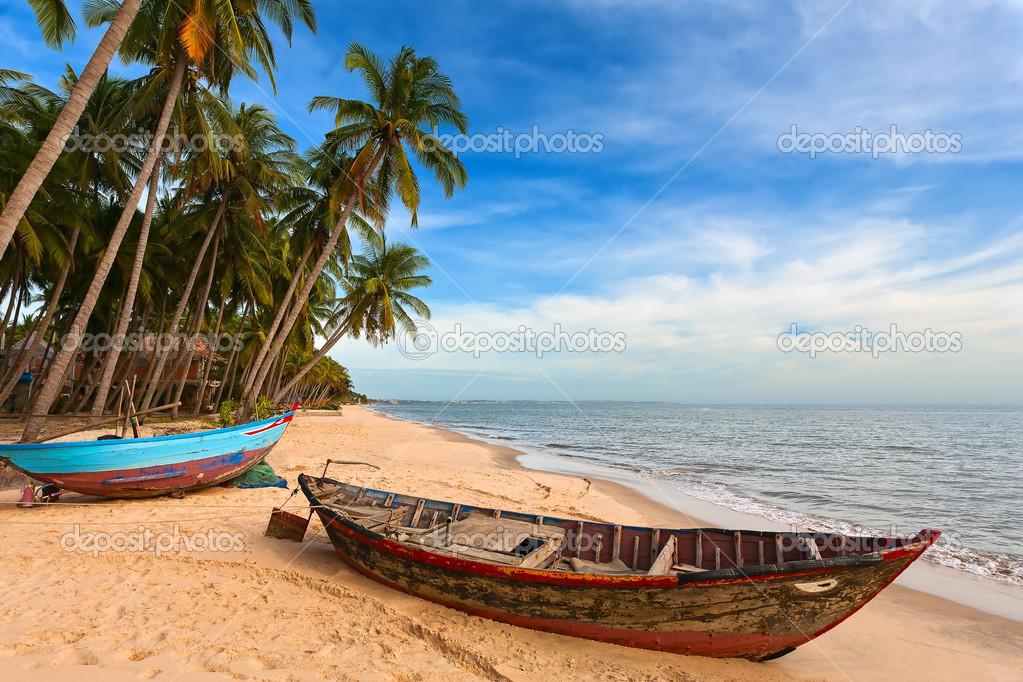 palm trees boat - photo #2