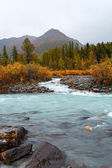 The mountain river with the wood — Stock Photo