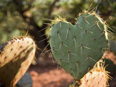 Cactus Heart — Stock Photo