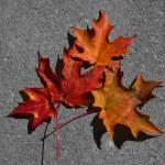 Autumn Leaves — Stock Photo #14705213