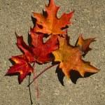 Autumn Leaves — Stock Photo #14705217