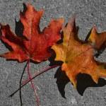 Autumn Leaves — Stock Photo #14705235