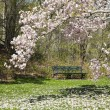 Green Park Bench and Magnolia Tree — Stock Photo #25466135