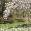 Green Park Bench and Magnolia Tree — Stock Photo