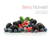 Berry oogst — Stockfoto