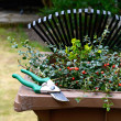 Stock Photo: Garden Waste Recycling II