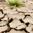 Drought — Stock Photo #29742151
