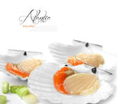 Atlantic King Scallops — Stock Photo