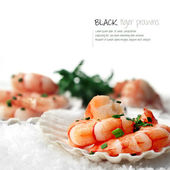 Black Tiger Prawns on snow — Stock Photo