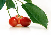 Cherries with leaves close up — Stock Photo