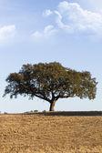 孤独な木 — ストック写真