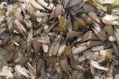 Swarm of winged termites — Stock Photo
