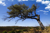 Lonely tree on a hill — Stock Photo