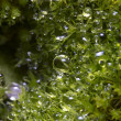Stock Photo: Moss grass with morning condensation