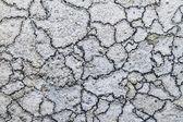 Ochrolechia parella lichen — Stock Photo