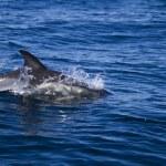 Wild dolphins — Stock Photo #25098439