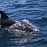 Wild dolphins — Stock Photo #25098497