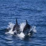 Wild dolphins — Stock Photo #25098655