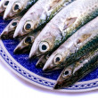 Atlantic mackerel — Stock Photo #25131919