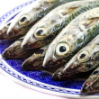 Atlantic mackerel — 图库照片