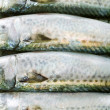 Atlantic mackerel — Stock Photo