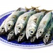 Atlantic mackerel — Stock Photo #25131965