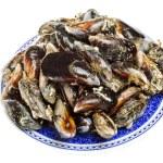 Blue mussel bivalve — Stock Photo #25132127