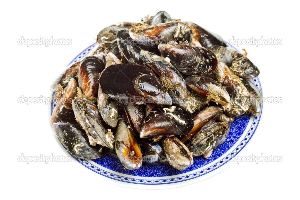 蓝贻贝海洋双壳类软体动物