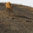 Remains of a forest fire — Stock Photo #25146257