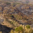 Remains of a forest fire — Stock Photo #25146295