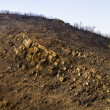 Remains of a forest fire — Stock Photo #25146375