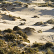 Vegetation on dunes — Stock Photo