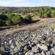 Stock Photo: Vast land in Alentejo