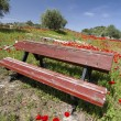 Stock Photo: Red poppy flower field