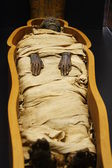Open casket of Egyptian mummy — Stock Photo
