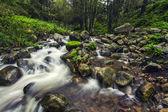 River stream on the beautiful Monchique region — Stock Photo