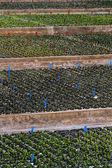 Indoors green plant nursery — Stock Photo